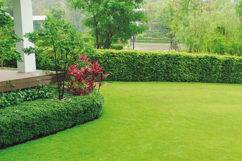 CZAS PIASTOWA_kacik ogrodniczy trawniki