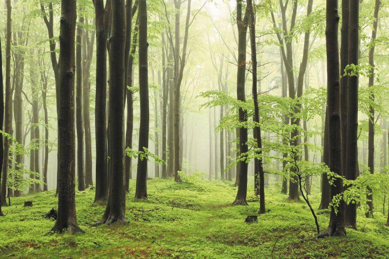 CZAS PIASTOWA polski las