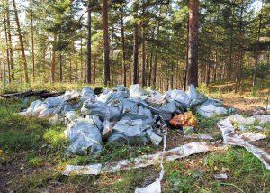 CZAS PIASTOWA zasmiecanie lasu